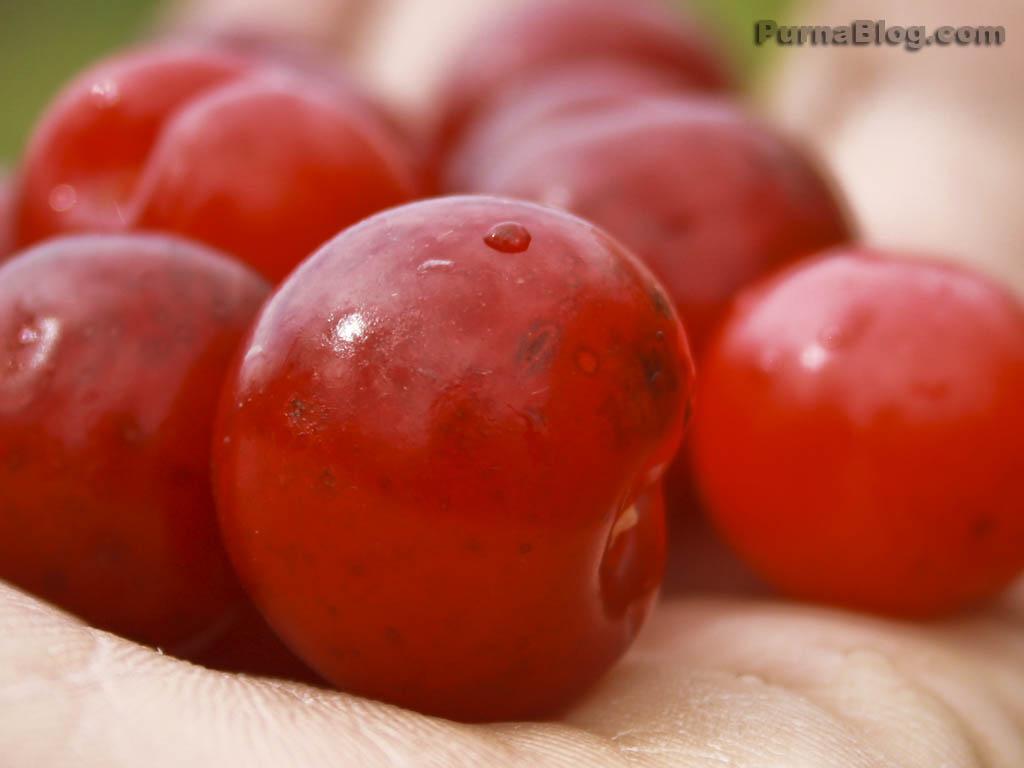 Cherries1_1024x768.jpg